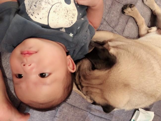 ゴロンとしていることが多い赤ちゃんと、床生活のペットは過ごす空間が似ています