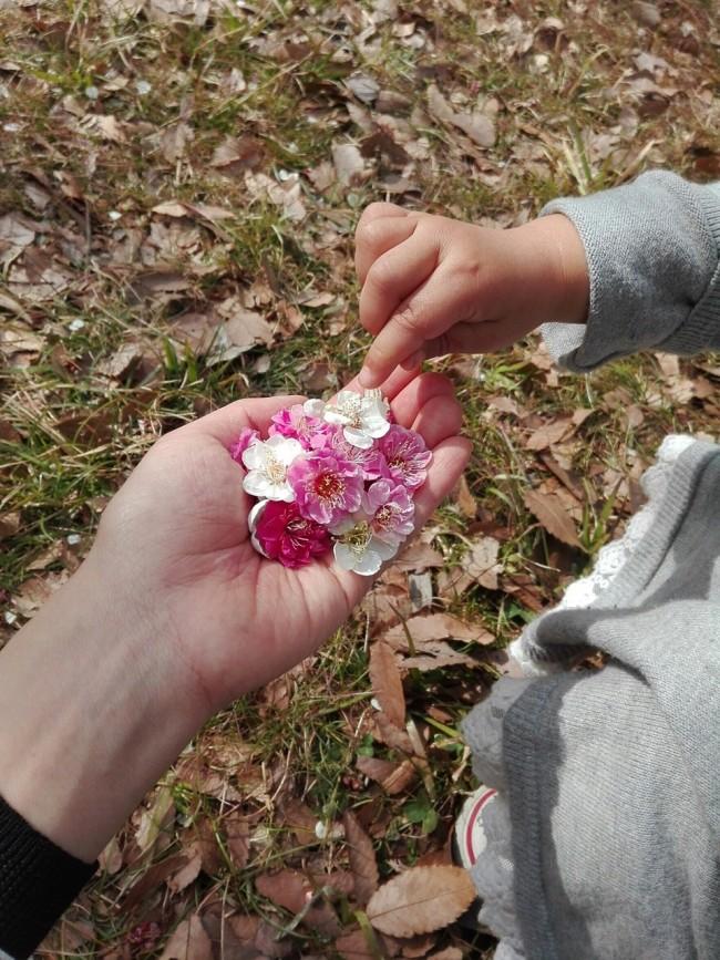 だんだんと春らしい陽気に! 原っぱでは、小さな春をたくさん見つけます