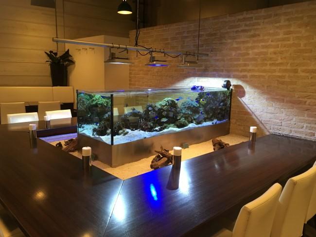 可愛い魚たちを見ながらの食事は、気分も和みます♥
