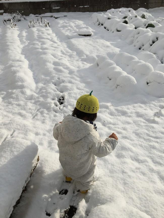 そんな畑も冬場は雪に埋まる日がたびたび。ちなみに赤ちゃんの時からかぶっているフルーツクロシェット帽がお気に入り