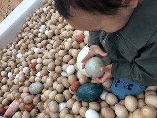 緑の卵はエミューの卵サイズ。息子も興味津々