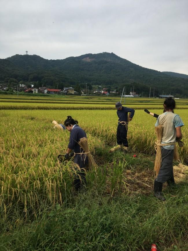 稲刈り体験もしました
