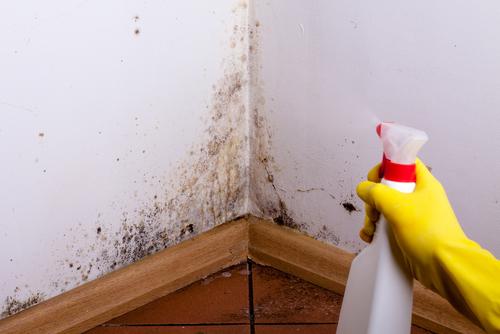 壁と家具の隙間を覗くとカビがびっしり!なんてことも…