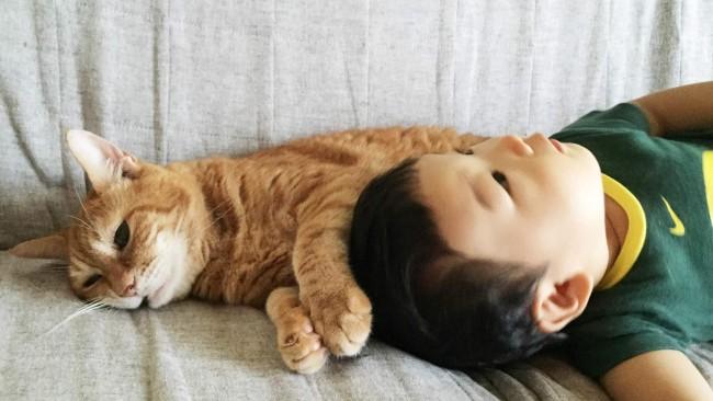 《ペット飼っていますか?》我が家のペット×こどもとの生活 〜猫編〜