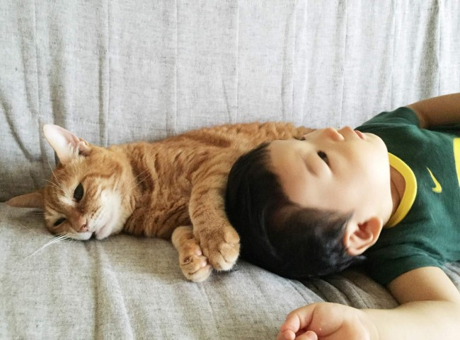 本当の兄弟のような、老猫「りんご」と息子「リトルコミー」