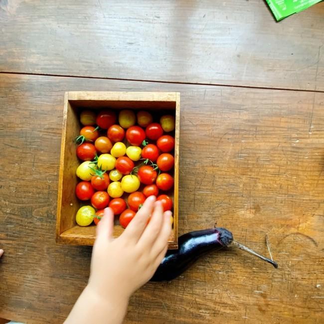 収穫したトマトとなす