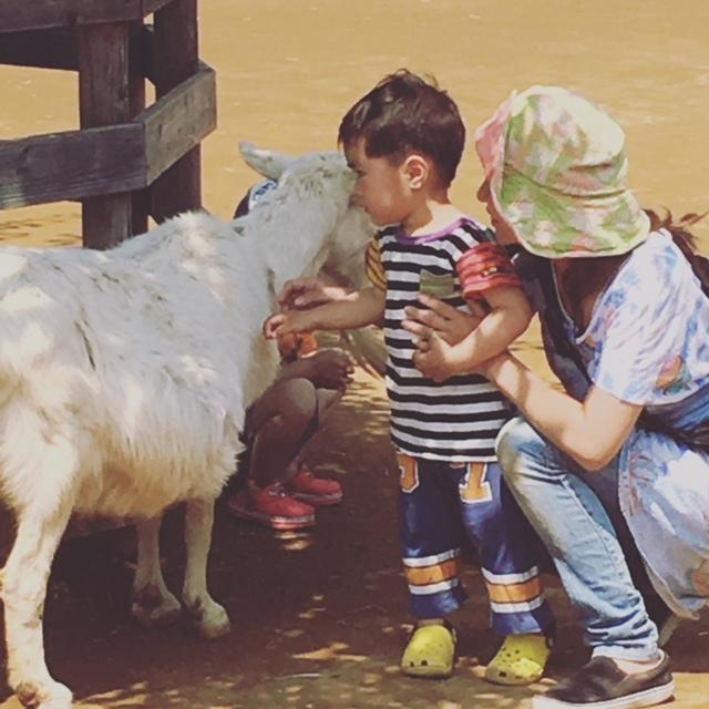 動物と触れ合いができる広場もあり、動物園のいいところどり!