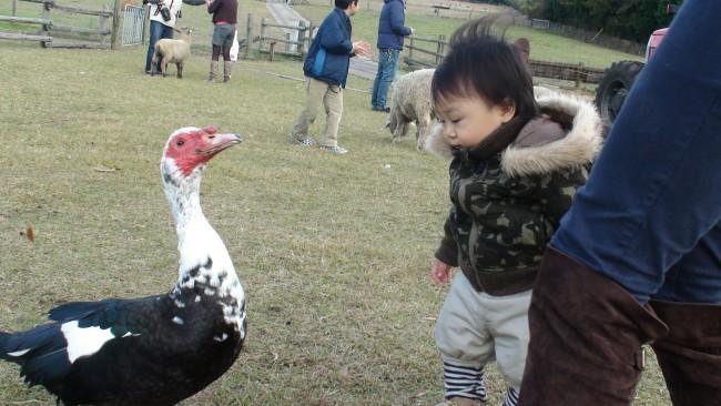 広大な敷地のなかでたくさんの動物と触れ合えます。乳搾りや手作り体験など、体験型イベントも盛りだくさん!