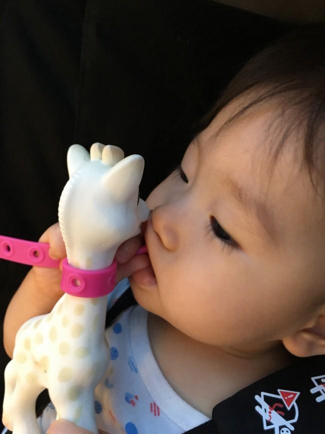 赤ちゃんはおもちゃだけでなくおもちゃホルダーごとなめます