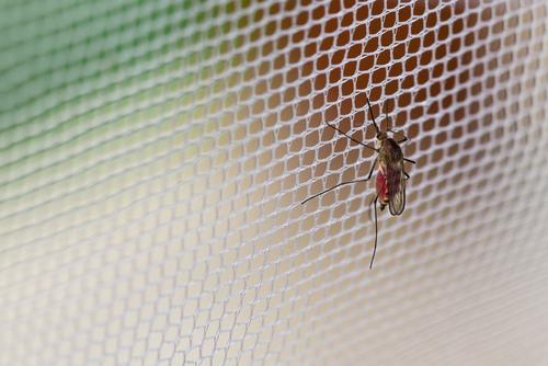 蚊が気になる季節。子どものためにも、安心・安全な対策をしたいですね