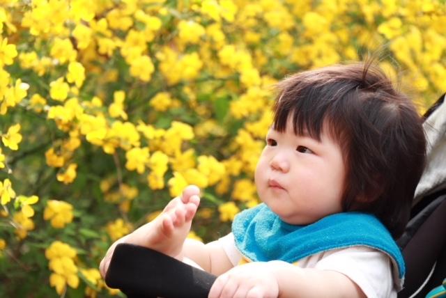お花見の季節以外でもいろいろな草花が楽しめるので、よく利用しています♪