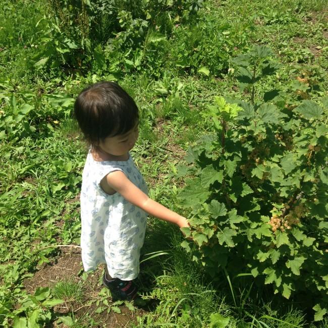 小さな小子連れの場合、土産として持ち帰れる収穫体験がオススメです!