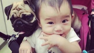 《3人の子&愛犬との暮らし》お部屋作りやタイムスケジュール、子どもたちでもできるペットのお世話は?
