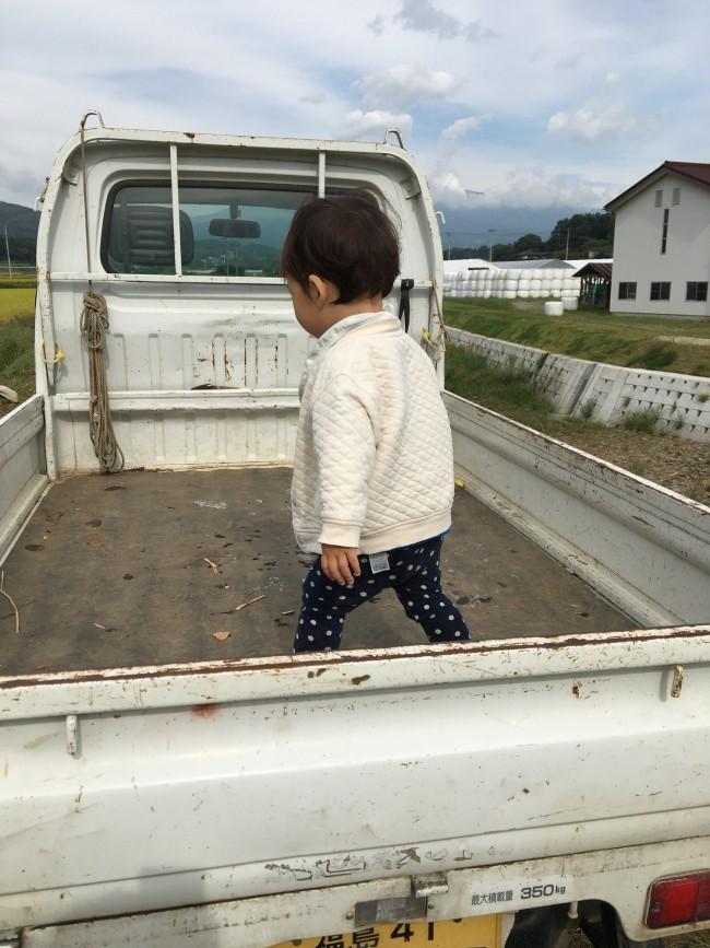 稲刈りせずに軽トラの荷台で遊んでいる娘
