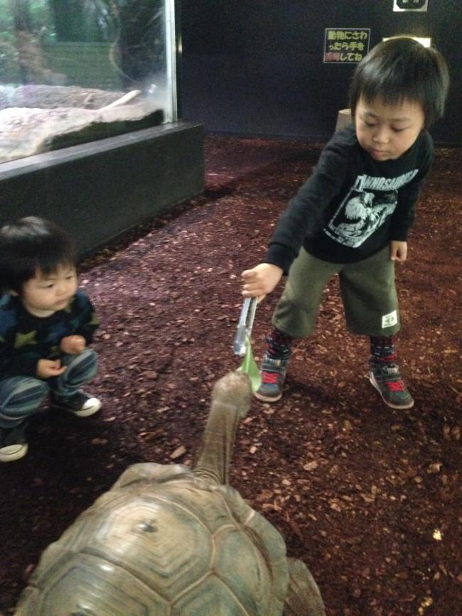 フツーの動物園とは一味違った体験ができるので、子どもたちも大喜びです!