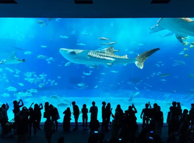 やっぱり欠かせないのは、美ら海水族館!
