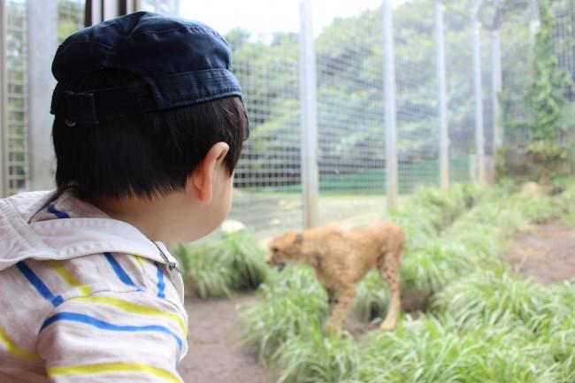 動物好きなファミリーにはぜひ一度訪れてほしい、伊豆アニマルキングダム。1歳の息子連れで行ってきました♪
