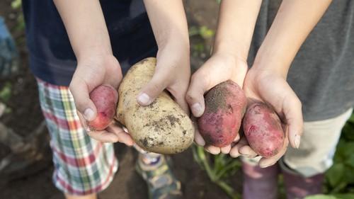 《秋のおでかけ、どこ行こう?》都内でもできちゃう、芋掘り体験で親子でほくほく♡
