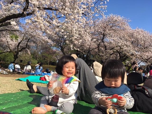 ものすごい数の満開の桜は圧巻♡
